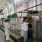 производство сушеных овощей2
