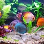Разведение и продажа аквариумных рыб.