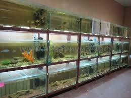 Разведение и продажа аквариумных рыб3